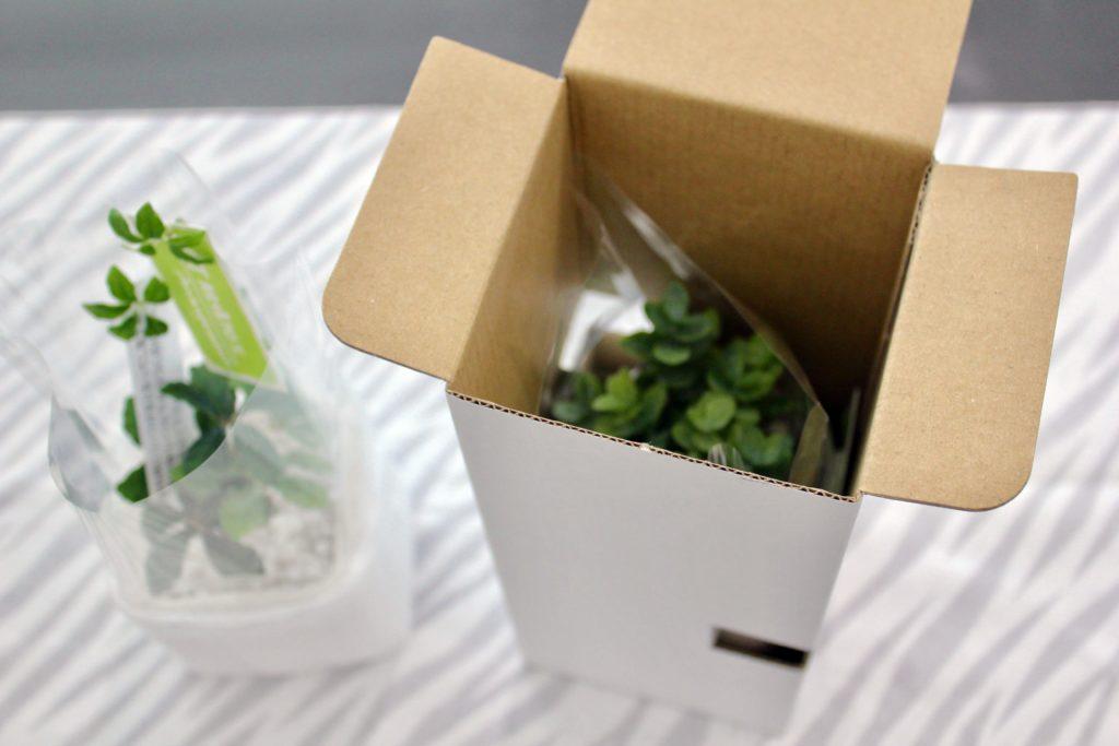 楽天市場「フェイクグリーンのお店 mintcafe」で購入した卓上サイズのミニフェイクグリーン