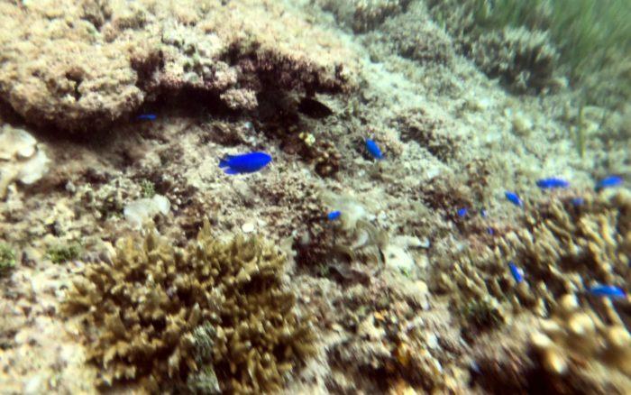 全機種対応の防水スマホケースアルケミティにiPhoneを入れて水中で魚を撮影