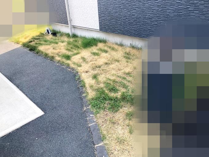 除草剤を使った芝生