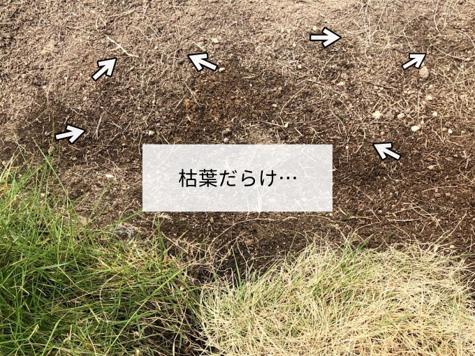 除草剤を使って枯れた芝生が土に散らかってる